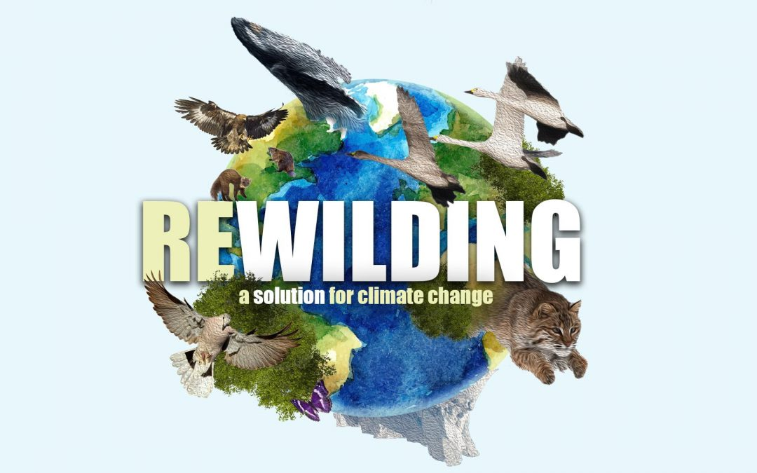 Rewilding – A Solution for Climate Change?