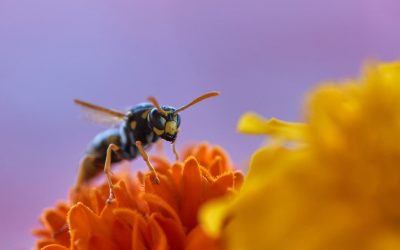 Love wine, beer and bread? Then respect the wasp.