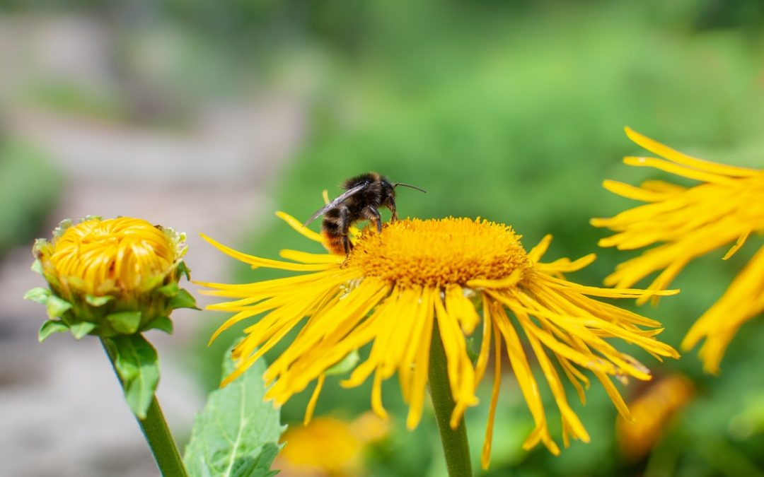 Bees are vital to a healthy economy