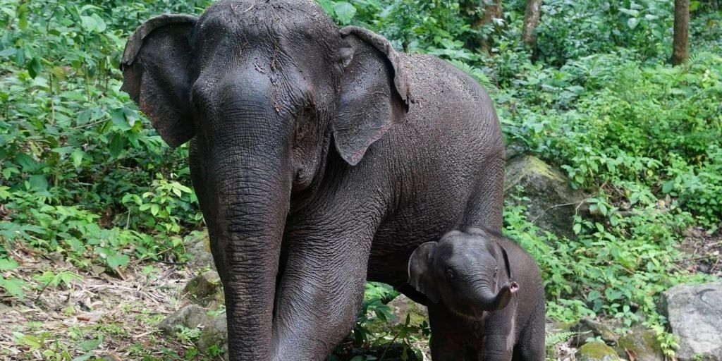 Take action this World Elephant Day