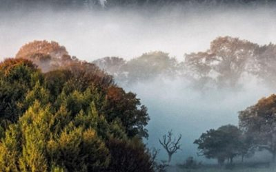 Climate Action North to host virtual Trees and Bees Conference