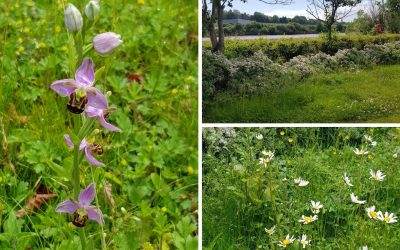 Making rewilding happen to shape a better future for all