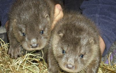 Climate Action North celebrates World Otter Day